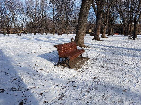 écureuil neige Montréal