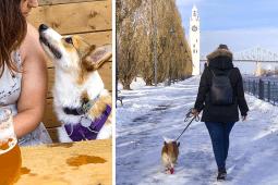5 activités à faire avec son chien à Montréal